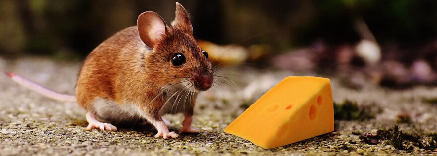 Mouse Exterminator - Rat Exterminator